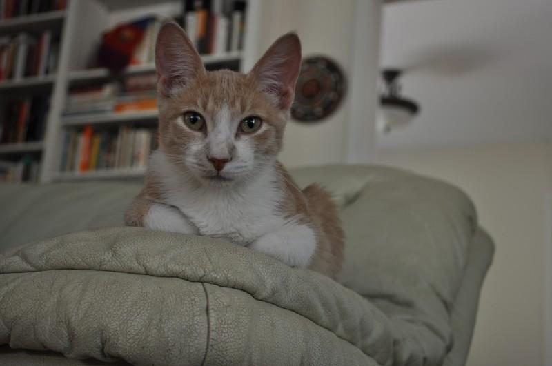 ramon kitten